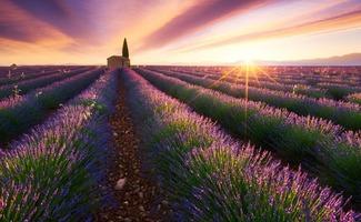 Thành phố Provence nước Pháp nơi trồng nhiều loài hoa Oải hương nhất nước Pháp